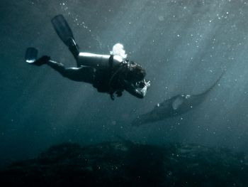 Diver-and-Manta-Ray-Manta-alfredi-at-Hin-Muang-Thailand