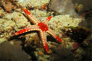 Koh-Haa-Islands-2-and-4-Seastar